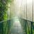misty · foresta · pluviale · nube · foresta · riserva · Costarica - foto d'archivio © juhku