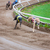 tazı · köpekler · yarış · kum · izlemek · ayaklar - stok fotoğraf © juhku