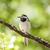 branco · ninho · edifício · pássaro · ramo · holandês - foto stock © juhku