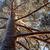 雪 · カバー · ツリー · 冬 · 自然 - ストックフォト © juhku