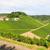 bella · vino · campi · panorama · estate · giorno - foto d'archivio © juhku
