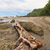 driftwood on rocky beach costa rica stock photo © juhku