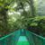 吊り橋 · 熱帯雨林 · 絞首刑 · 雲 · 森林 · リザーブ - ストックフォト © juhku