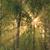 słońce · promienie · mgły · lasu · rano · północny · zachód - zdjęcia stock © juhku