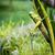 グラスホッパー · 茂み · 庭園 · 草 · 自然 · 葉 - ストックフォト © juhku