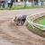 tazı · köpekler · yarış · kum · izlemek · eğlence - stok fotoğraf © juhku