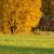nature landscape in autumn colors stock photo © juhku