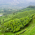 tea · égbolt · levél · zöld · hegyek · mezőgazdaság - stock fotó © juhku