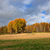 landscape field trees autumn colors stock photo © juhku