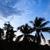 手のひら · 森林 · シルエット · 日の出 · 日没 · 風景 - ストックフォト © juhku