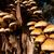 ツリー · 菌 · 森林 · 緑 · 背景 - ストックフォト © juhku