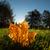hoja · de · arce · hierba · amanecer · luz · manana · naturaleza - foto stock © juhku