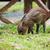кабан · поросенок · молодые · животного - Сток-фото © juhku