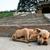 kutya · fektet · járda · utca · szomorú · hajléktalan - stock fotó © juhku