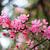 красивой · яблоко · Blossom · весны · время · Blue · Sky - Сток-фото © juhku