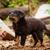 cute · bruin · puppy · hond · naar · camera - stockfoto © juhku