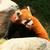 赤 · パンダ · ツリー · 自然 · 猫 · 葉 - ストックフォト © juhku