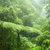 misty rainforest in monteverde cloud forest reserve stock photo © juhku