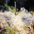 gyönyörű · reggel · fény · lucfenyő · erdő · sugarak - stock fotó © juhku