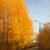 warm · zonsondergang · zonlicht · najaar · bos · licht - stockfoto © juhku