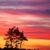 fa · sziluett · gyönyörű · vibráló · naplemente · felhők - stock fotó © juhku
