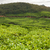 çay · Hindistan · bulutlu · gün · ağaçlar · dağ - stok fotoğraf © juhku
