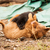 aranyos · kiskutyák · játszik · együtt · utca · segítség - stock fotó © juhku