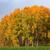 cair · campo · água · árvore · grama - foto stock © juhku