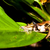 béka · növény · levelibéka · ki · közelkép · fókusz - stock fotó © juhku