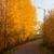 sıcak · gün · batımı · güneş · ışığı · sonbahar · orman · ışık - stok fotoğraf © juhku