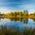 紅葉 · 池 · カバー · 緑 · 水生の · 植物 - ストックフォト © juhku