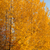 trees in autumn colors background stock photo © juhku