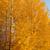 日没 · 日光 · 秋 · 森林 · 光 - ストックフォト © juhku