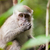 sauvage · singe · arbre · habitat · nature · faune - photo stock © juhku
