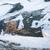 wild heather at winter stock photo © juhku