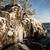 壁 · 氷 · 森林 · 岩 · 詳細 · 草 - ストックフォト © juhku
