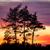 tree silhouette and beautiful vibrant sunset clouds stock photo © juhku