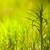 çim · görüntü - stok fotoğraf © juhku
