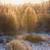 冷ややかな · 午前 · 日照 · テクスチャ · 自然 · 背景 - ストックフォト © juhku
