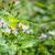 kelebek · görüntü · makro · çiçekler · doğa · hayvan - stok fotoğraf © juhku