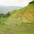 rice fields in longshen china stock photo © juhku