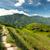 コメ · 中国 · 風景 · 夏 · 食品 · 背景 - ストックフォト © juhku