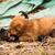 cute stray puppies playing stock photo © juhku