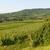 mezők · szőlőtőke · kilátás · háttér · mező · ipar - stock fotó © juhku