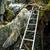 pinnacles trek in gunung mulu national park stock photo © juhku