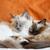 猫 · 顔 · クローズアップ · 表示 · 猫 - ストックフォト © juhku