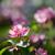 részlet · alma · rügy · fa · háttér · szépség - stock fotó © juhku