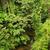 küçük · orman · nehir · borneo · çamurlu · kaya - stok fotoğraf © juhku