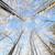 雪 · カバー · ツリー · 観点 · 表示 - ストックフォト © juhku