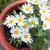 bahar · papatyalar · alan · güneş · arı - stok fotoğraf © juhku